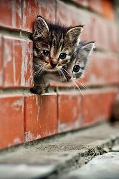 Kittens! So cute!!! :)                                                                                                                                                     More