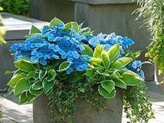 Konténerbe ültethető árnyéktűrő növények - Bernikert