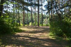 Pog Lake Algonquin Park Ontario Canada Algonquin Park, Forests, Ontario, Country Roads, Canada, American, Summer, Summer Time, Woods