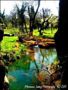 Parc national de Ifrane Morocco