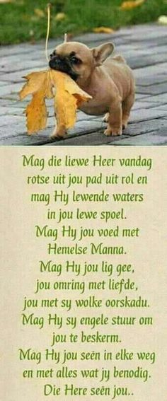 Die Here seën jou. Good Morning Prayer, Good Morning Good Night, Good Morning Wishes, Morning Prayers, Good Morning Quotes, Christian Pictures, Christian Quotes, Christian Women, Evening Greetings