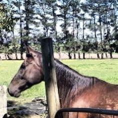 A horse ať horse riding