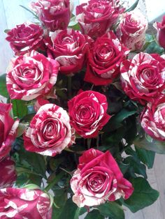 Scentimental roses -- we still have tons left!!