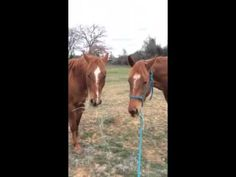 In this sweet video, a chivalrous horse gallops to his lady friend, with a mouth full of hay, so they can enjoy a snack together, Lady and the Tramp style.