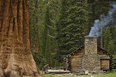 Cabin Among Giant Sequoias Photography byRyan Paul (Mariposa Grove, California);Newton, Pennsylvania
