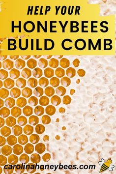 Why do honeybees draw comb in the hive? Because they need a lot of it for storage. Beekeepers can help their hives build comb faster. Use these tips to make sure your bees have what they need to get the job done. #carolinahoneybees