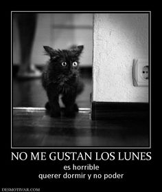 'No me gustan los lunes, es horrible querer dormir y no poder,' nos dice este gato negro precioso.  (Black cat Monday)