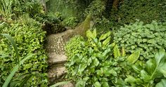 Rustic Path in Shade Garden at Hidcote Manor