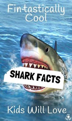 Got a shark fan? Here are some cool shark facts kids will LOVE.Summer and Shark Week is a fantastic time to get the kids learning and caring about sharks. Fun Facts About Sharks, All About Sharks, Cool Sharks, Sharks For Kids, Shark Facts For Kids, Whale Sharks, Cool Facts For Kids, Great White Shark Facts, Shark Jaws