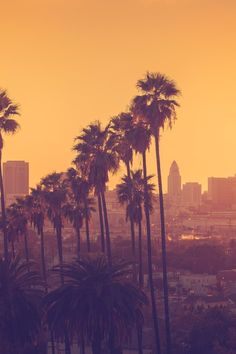 79 Things to Do for Free in LA - In the land of splashy pool parties and Hollywood movie studios, swag reigns supreme — but you don't have to be red carpet royalty to get things for free. Here, some tips and tricks for seeing LA's must-see spots – and maybe the stars — for a bargain.