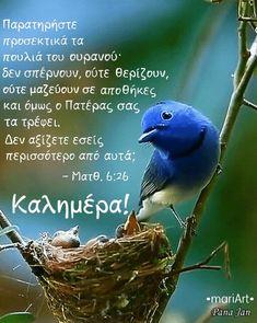 Blue Jay, Good Morning, Animals, Buen Dia, Animales, Bonjour, Animaux, Animal, Animais