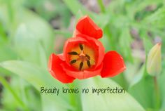 Im Not Perfect, Gardens, Inspirational, Rose, Flowers, Plants, Image, Beauty, Pink