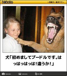 犬「初めましてプードルです。はっはっはっは!違うか!」