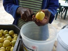 Making your own homemade Marula beer – The Slowvelder Make Your Own, How To Make, Beer Recipes, Homemade, Fruit, Diy Crafts, The Fruit, Hand Made, Do It Yourself