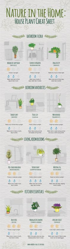 Never question how much sunlight your spider plant needs again. Never question how much sunlight your spider plant needs again. Never question how much sunlight your spider plant needs again. Plantas Indoor, Decoration Plante, Diy Decoration, Spider Plants, Plant Needs, Finding A House, Cheat Sheets, My New Room, Houseplants