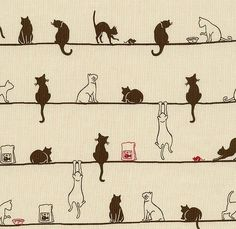 Cats, got to love them!
