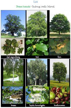 Las: to zbiorowisko roślinne, w którym obok siebie występują drzewa, krzewy i rośliny zielne uło...
