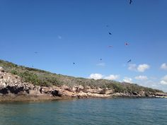 Mar de Cortés #IsladePájaros