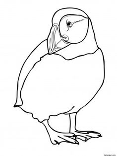 Printable zoo birds Atlatntic Puffin coloring page - Printable Coloring Pages For Kids