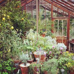 Chelsea Physic Garden 66 Royal Hospital Road, Chelsea, SW3 4HS 020 7352 5646 www.chelseaphysicgarden.co.uk