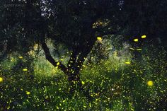 Souls Photo by Ionut Burloiu — National Geographic Your Shot