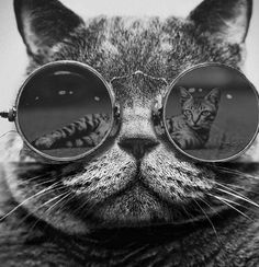 Ideas for funny animals faces heart Funny Animal Faces, Funny Animal Photos, Funny Pictures With Captions, Funny Animals, Cute Little Kittens, Kittens Cutest, Cats And Kittens, Kitty Cats, Cat Posters