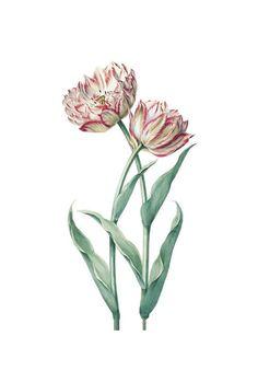 Tulips in the Garden di Rose Anne su Etsy