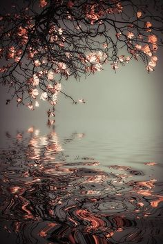 Love the reflection of flowers and leaves in the water