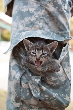 This kitten who found a new home in the pocket of a soldier. | 42 Pictures That Will Make You Almost Too Happy