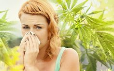http://www.medical-marijuana.news/blog/can-cannabis-help-spring-allergies/