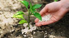 A szer, amit szinte senki sem ismer, pedig csodákra képes a kertben! Herb Garden, Herbs, Floral, Flowers, Gardening, Decor, Plant, Decoration, Lawn And Garden