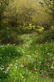 Orchard with wild flowers