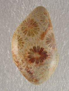 Coral Fossilized Coral, Prehistoric, Color, Colour, Prehistoric Age, Prehistory, Colors