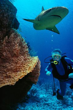 SHARK, Top 10 Places to Scuba Dive