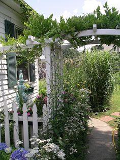 arbor wisteria | photo
