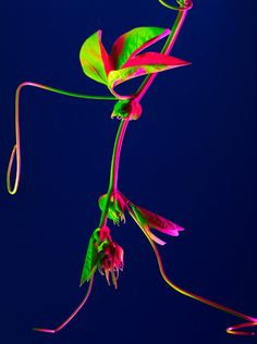 Dazzling hothouse color botanicals photographed by Torkil Gudnason