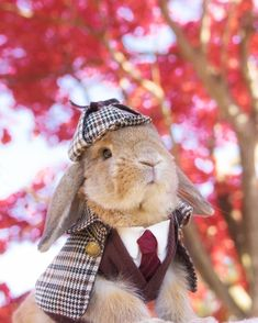 These 24 Halloween Pet Costumes may Just be Better than Your Own! Sherlock Holmes the Rabbit Mini Lop Bunnies, Dwarf Bunnies, Cute Baby Bunnies, Bunny Halloween Costume, Rabbit Halloween, Couple Halloween, Animal Costumes, Pet Costumes, Costumes For Rabbits