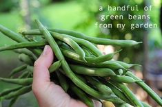 how to grow green beans and other things to eat. link with pictures and how to garden