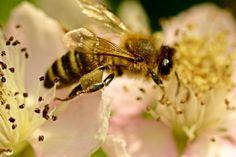 'Biene auf Blüte' von toeffelshop bei artflakes.com als Poster oder Kunstdruck $17.33
