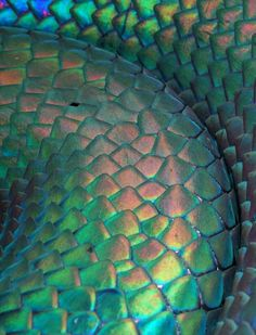 Iridescent ~ PINNER NOTE: This appears similar to the Reptilians' Lovely colorful skin appearance.
