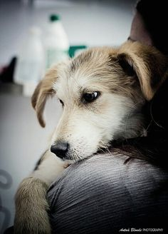 Me encanta cuando me mimas - antua blonde photography -  fotógrafo solidario - barcelona - animal - fotos - reportajes - animal de compañía - maresme - cat - gat - gato - dog - gos - perro