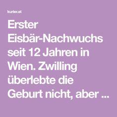 Erster Eisbär-Nachwuchs seit 12 Jahren in Wien. Zwilling überlebte die Geburt nicht, aber Mutter Nora und Baby sind wohlauf. Austria, Baby, Twins, Newborn Babies, Infant, Baby Baby, Doll, Babies, Infants