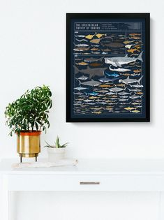 The Spectacular Survey of Sharks Nautical Nursery, Nautical Baby, Species Of Sharks, Deep Water, Lab, Chart, Gift Ideas, Prints, Painting