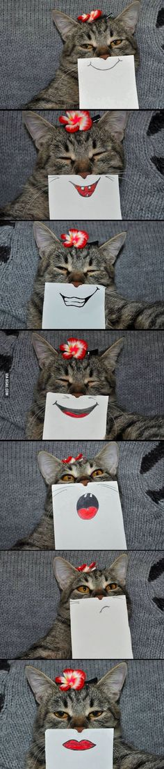 Cat with paper drawn expressions
