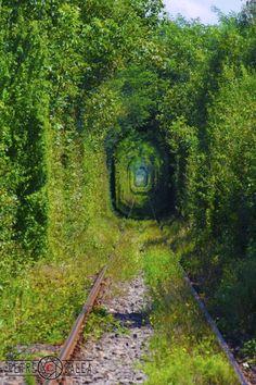 """Dacă mergeţi să vedeţi """" Tunelul iubirii """" şi să-l fotografiaţi alegeţi orele de la răsărit sau apus, sau imediat după o ploicică de vară."""