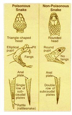 Features of poisonous & non-poisonous snakes