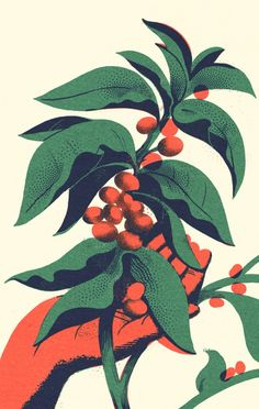 Best Illustration Coffee Plant 5 Color images on Designspiration Art And Illustration, Coffee Illustration, Floral Illustrations, Graphic Design Illustration, Illustration Botanique, Coffee Plant, Coffee Poster, Plant Drawing, Plantation