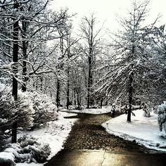 Great photo taken by Instagram fan @ldmarshall90 of yesterday's snowfall on campus #gvsu