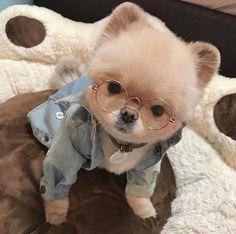 Dog Training –Training for Proper Dog Behavior Super Cute Puppies, Baby Animals Super Cute, Cute Baby Dogs, Cute Little Puppies, Cute Dogs And Puppies, Cute Little Animals, Cute Funny Animals, Baby Animals Pictures, Cute Animal Pictures