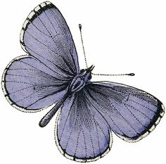 Vintage Purple Butterfly Image! - The Graphics Fairy